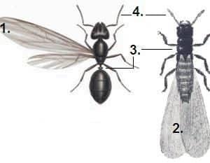 Preventivi e costi disinfestazione Termiti e Formiche con le ali Brindisi
