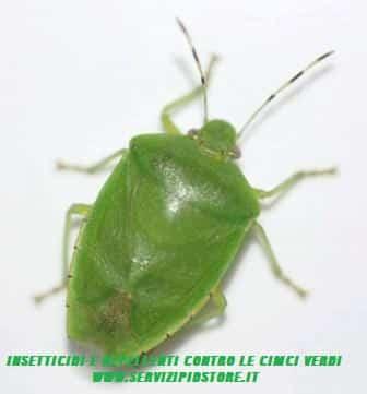 Disinfestazione cimici verdi insetti che possono entrare for Cimici rosse
