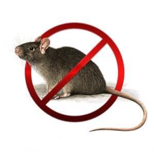 Tracce di escrementi di topo in casa. Cosa fare?