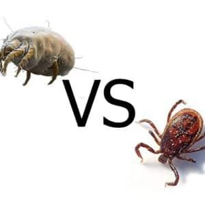 Differenza tra acari e zecche