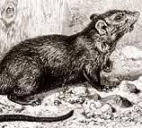 Perché i topi fanno paura?