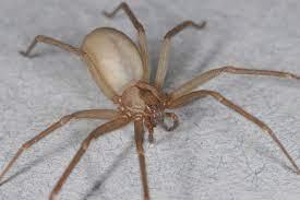 Quale insetto può pungere in casa?