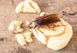 Malattie causate dagli scarafaggi
